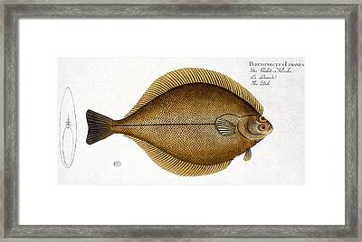 Dab Framed Print by Andreas Ludwig Kruger