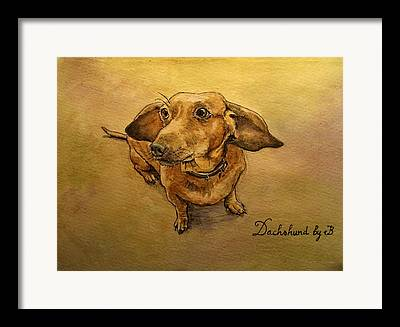 Dachsund Framed Prints