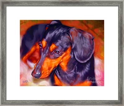Dachshund Portrait Framed Print by Iain McDonald