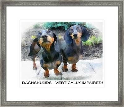 Dachshund Poster Framed Print by Betsy Cotton