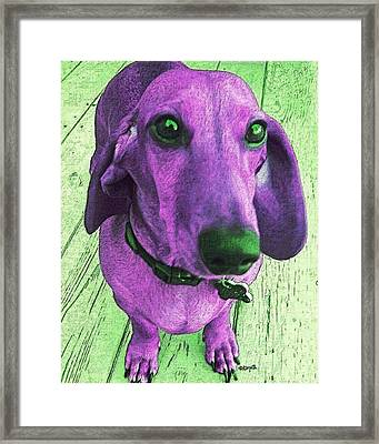 Dachshund - Purple People Greeter Framed Print by Rebecca Korpita