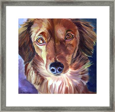 Dachshund Sparkle Eyes Framed Print by Lyn Cook