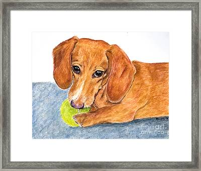 Dachshund With Tennis Ball Framed Print by Kate Sumners