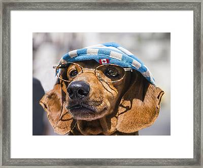 Dacsuhund With Hat And Eyeglasses Framed Print by David Litschel