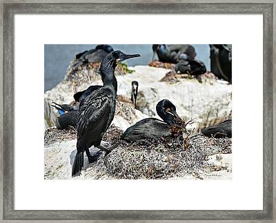 Dad And Mom Building The Best Nest Framed Print