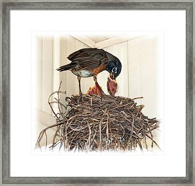 Dad Brings Home The Worm Framed Print