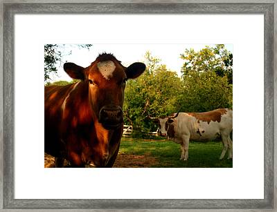 Dads Cows Framed Print by Lon Casler Bixby