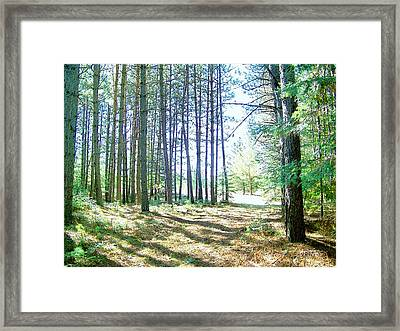 Dad's Woods I Framed Print