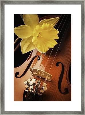 Daffodil And Violin Framed Print by Garry Gay