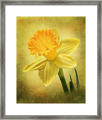 Framed Print featuring the photograph Daffodil by Ann Lauwers