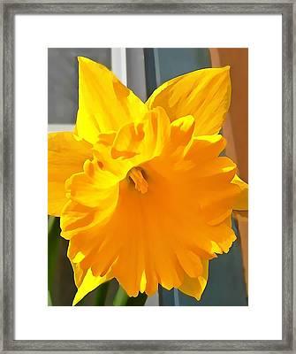 Daffodil Framed Print by Anne Sterling