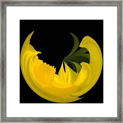 Daffodil Arc Framed Print by Cyndy Doty