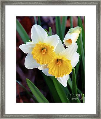 Daffodil Art  Framed Print by Andee Design
