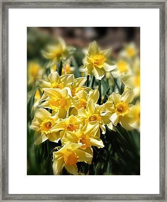 Daffodil Framed Print by Bill Wakeley