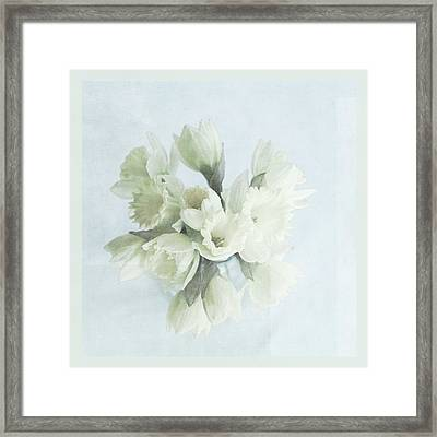 Daffodil Blue Framed Print by Beverly Cazzell