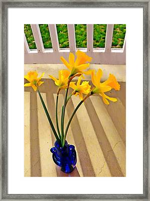 Daffodil Boquet Framed Print by Chris Berry