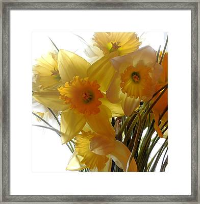 Daffodil Bouquet Framed Print