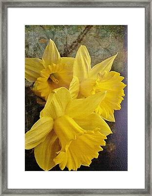 Framed Print featuring the photograph Daffodil Burst by Diane Alexander