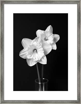 Daffodil Flowers Black And White Framed Print by Jennie Marie Schell