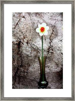 Framed Print featuring the photograph Daffodil by Gray  Artus