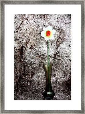 Daffodil Framed Print by Gray  Artus