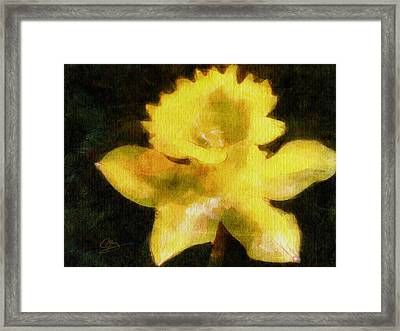 Framed Print featuring the painting Daffodil by Greg Collins