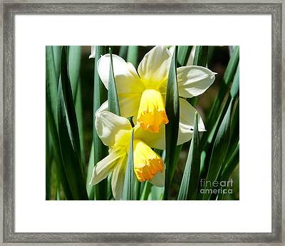 Framed Print featuring the photograph Daffodil Hug by Kristen Fox