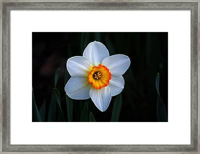 Framed Print featuring the photograph Daffodil In Riverside Park by Bill Swartwout