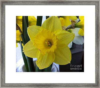 Daffodil Framed Print by Julie Koretz