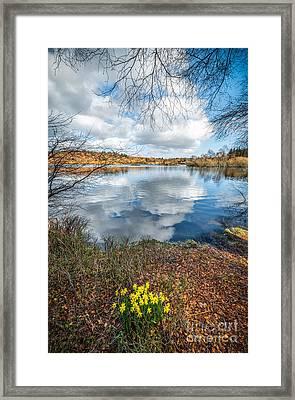 Daffodil Lake Framed Print by Adrian Evans