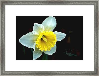 Framed Print featuring the photograph Daffodil by Ludwig Keck