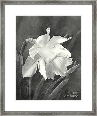 Daffodil Framed Print by Nicola Butt