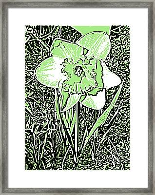 Daffodil Pen And Ink In Green Framed Print