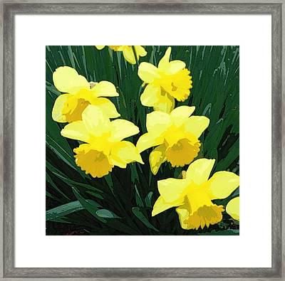 Daffodil Song Framed Print by Pamela Hyde Wilson