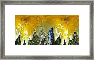 Daffodil Unleashed Framed Print by Tim Allen