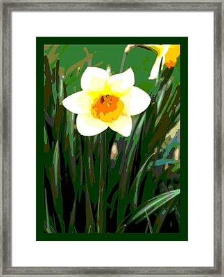 Daffodil With Border Framed Print by L Brown