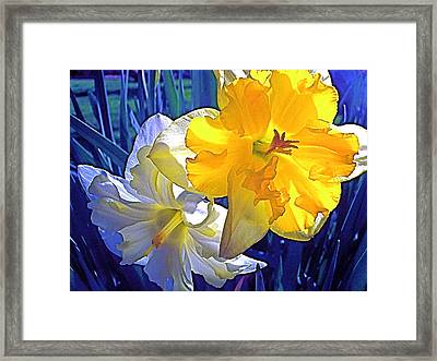 Framed Print featuring the photograph Daffodils 1 by Pamela Cooper