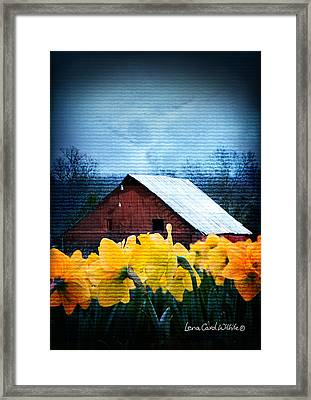 Daffodils And A Red Barn Framed Print by Lena Wilhite