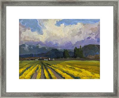 Daffodils And Clouds Framed Print by Diane McClary