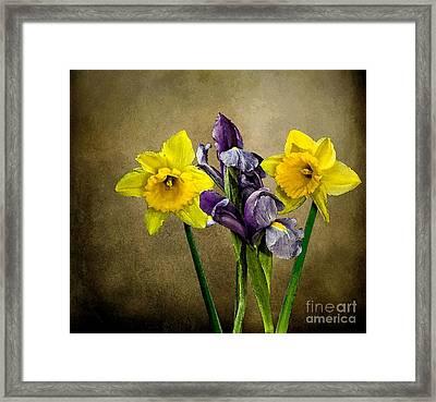 Daffodils And Iris Framed Print