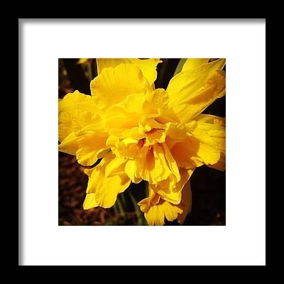 Yellow Framed Prints