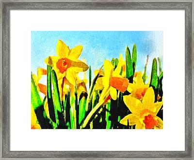 Daffodils By Morning Light Framed Print