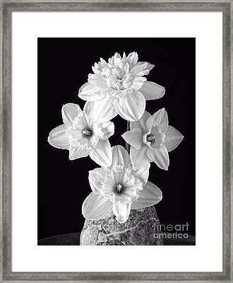 Daffodils Framed Print by Edward Fielding