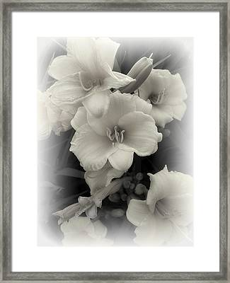 Daffodils Emerge Framed Print by Daniel Hagerman