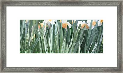 Daffodils In The Midst Framed Print by Kristie Mercer