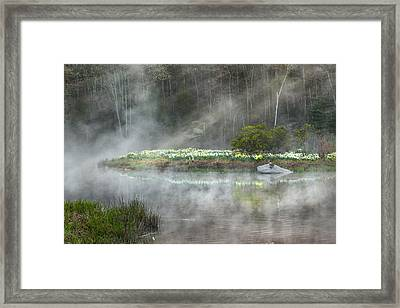 Daffodils Of The Fog Framed Print by Bill Wakeley