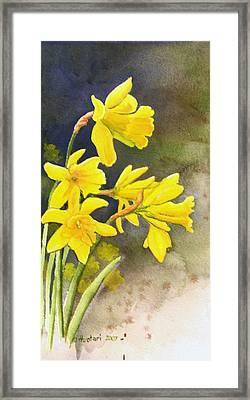 Daffodils Framed Print by Rick Huotari