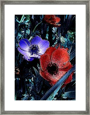 Daffy Blue And Red Framed Print