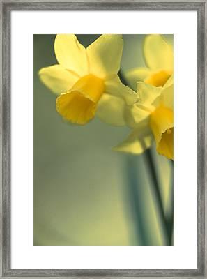 Daffy-down-dilly  Framed Print