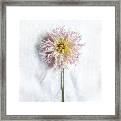 Dahlia #2 Framed Print
